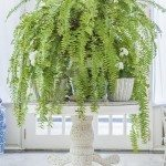 Green fern in white pot on table, English country style