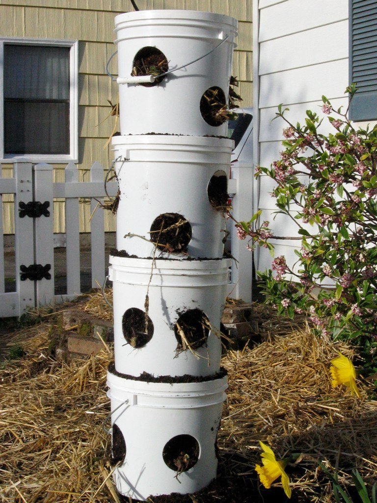 Vertical strawberry planter learn about planting in for Vertical garden tower