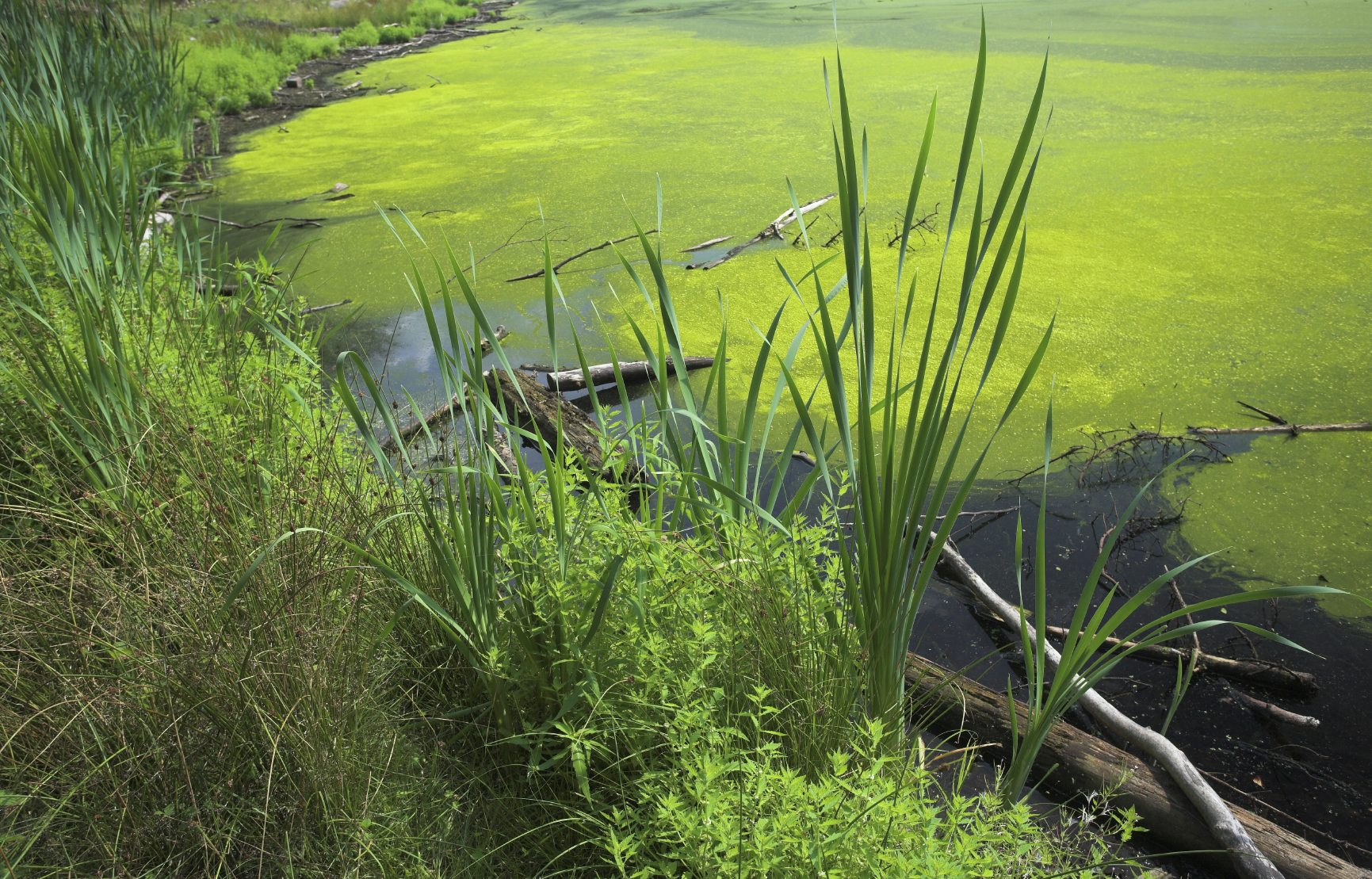 Is algae control necessary learn about algae for Pond problems