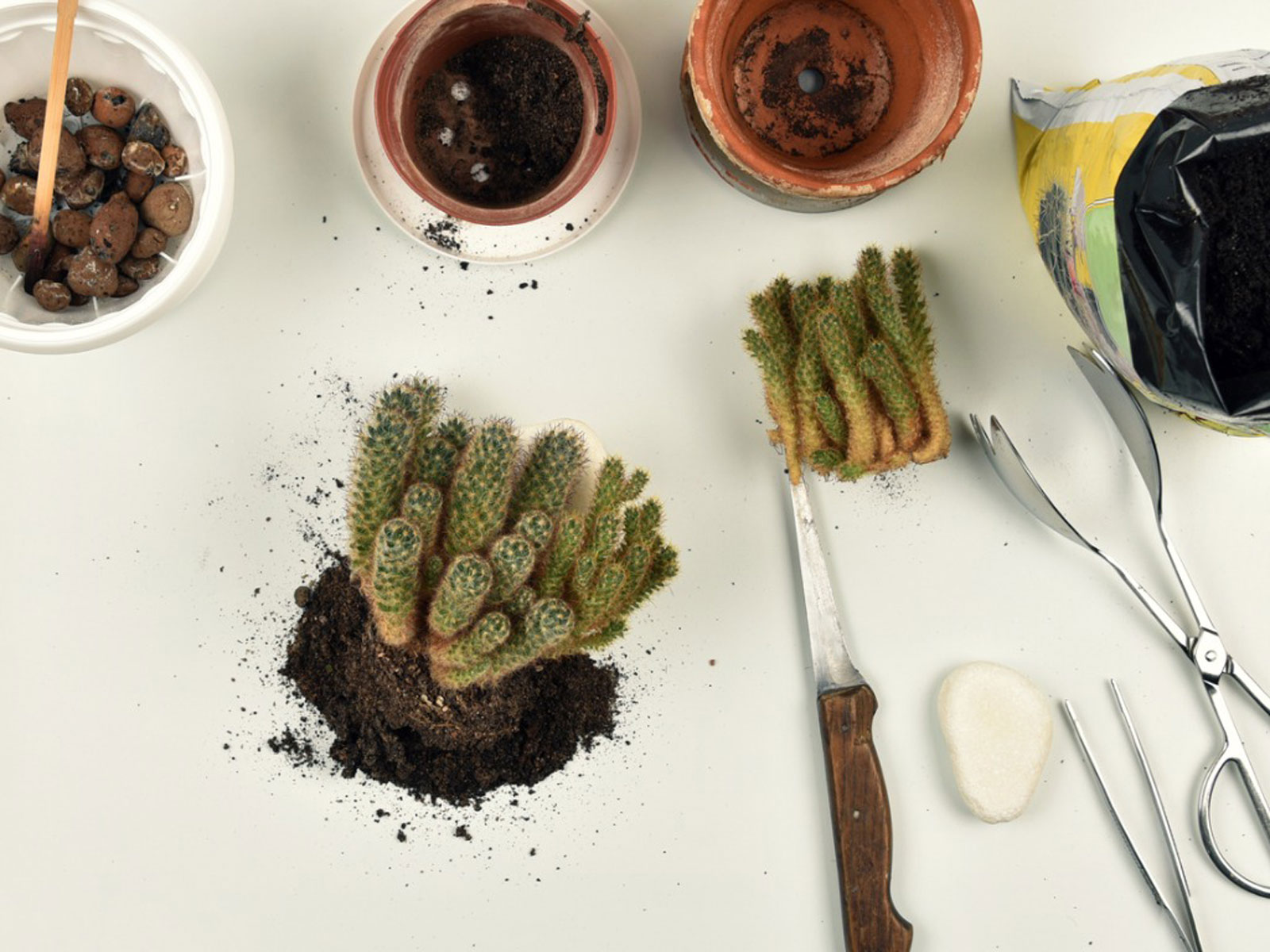 Repotting Cactus Tips How And When To Repot A Cactus Plant