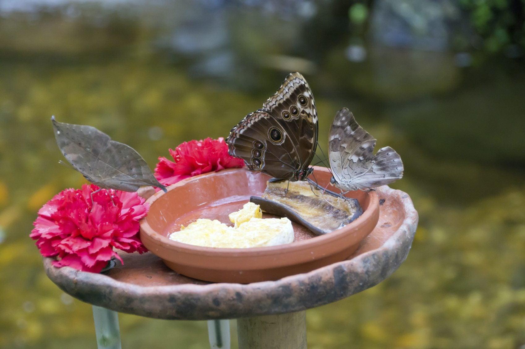 Erfly Water Feeder Tips Supplying