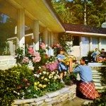 fifties garden