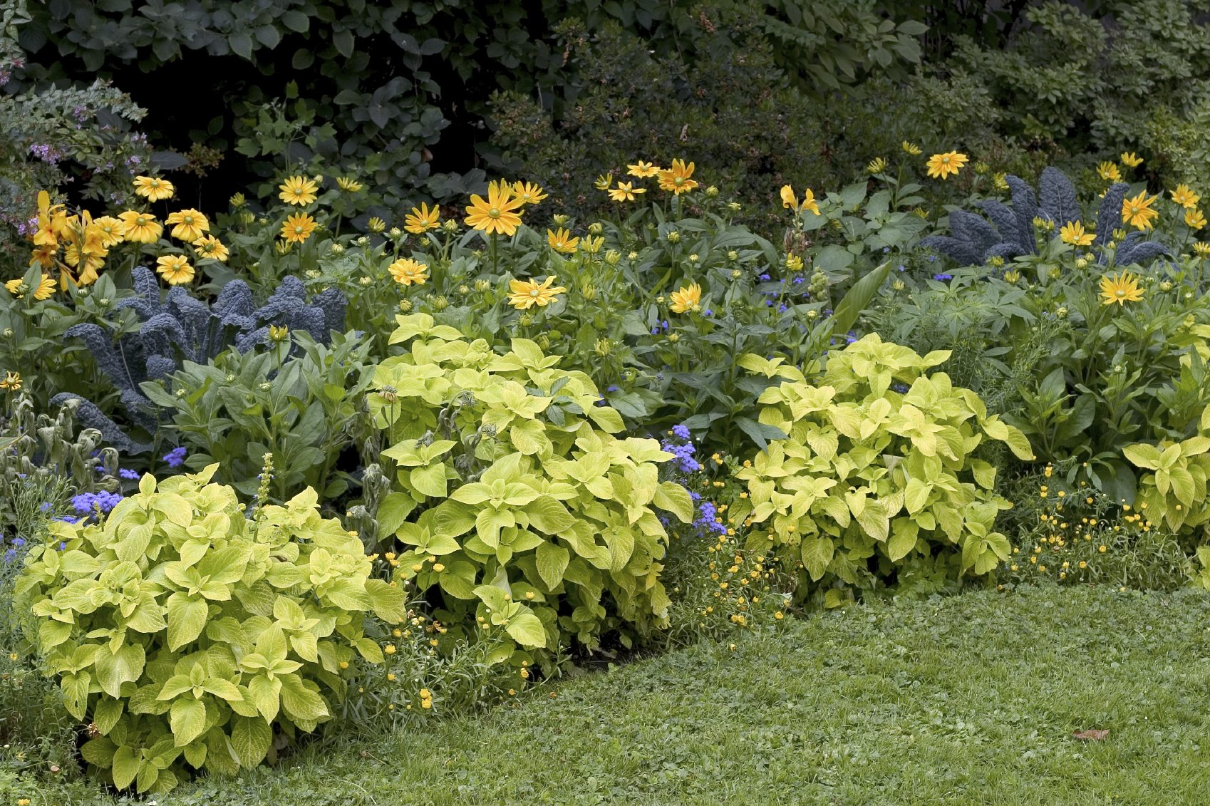 Low Maintenance Garden Tips - Ideas And Plants For Easy Gardening