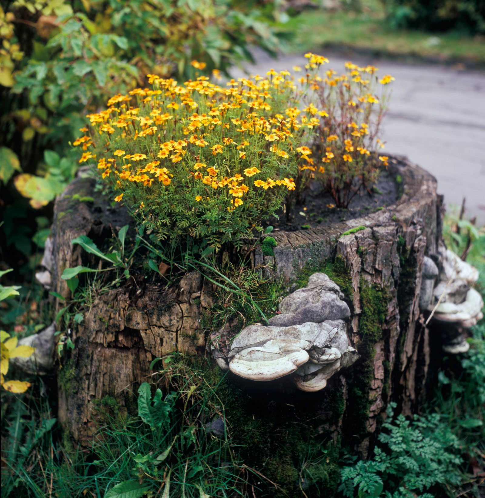 Making a hollow stump planter tips for creating planters for Hollow tree trunk ideas