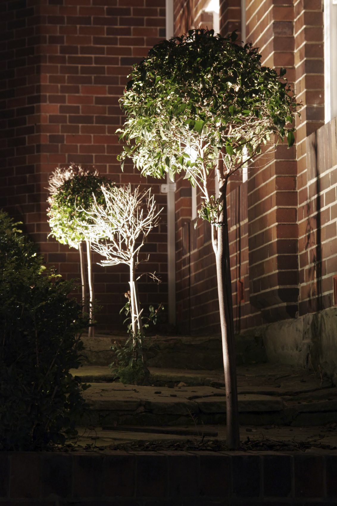 Diy Uplighting Garden Lighting