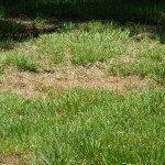 bare-spots-yard