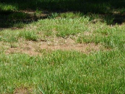 Can A Brown Lawn Be Saved How To Revive A Dead Lawn