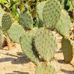 drought-desert-plant