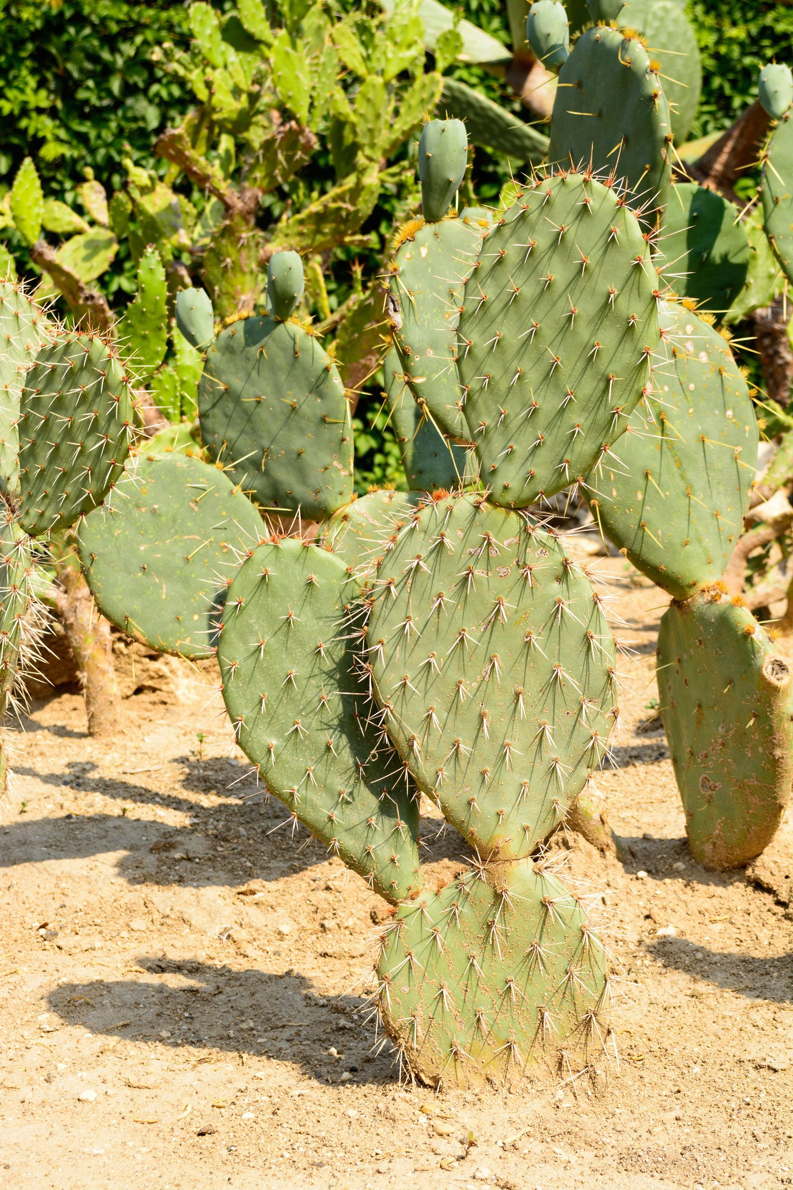 Benefits Of Drought Tolerant Plants - Using Drought ...