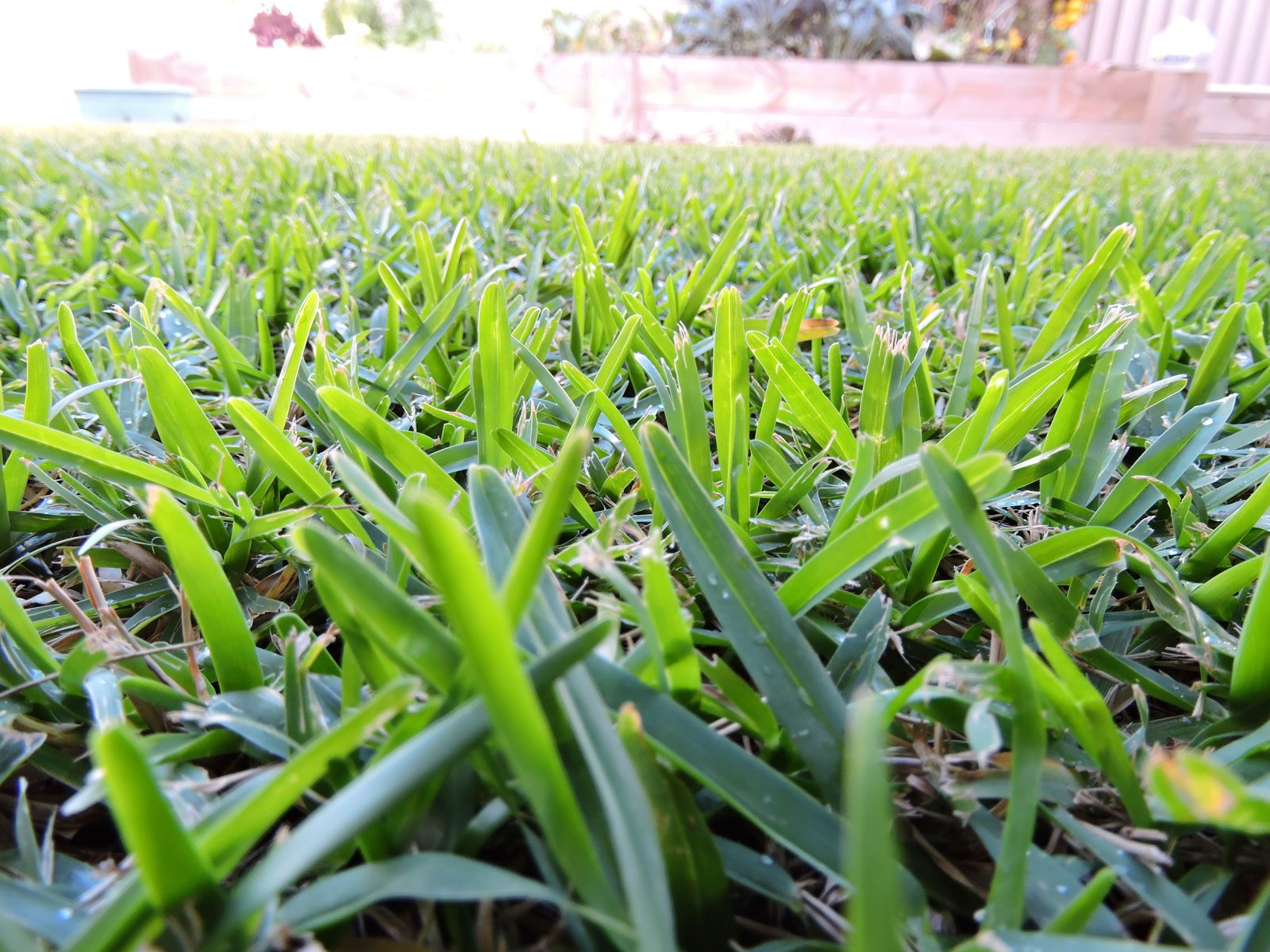 Drought Tolerant Grass Varieties What Are Some Types Of Drought Resistant Grass For Lawns