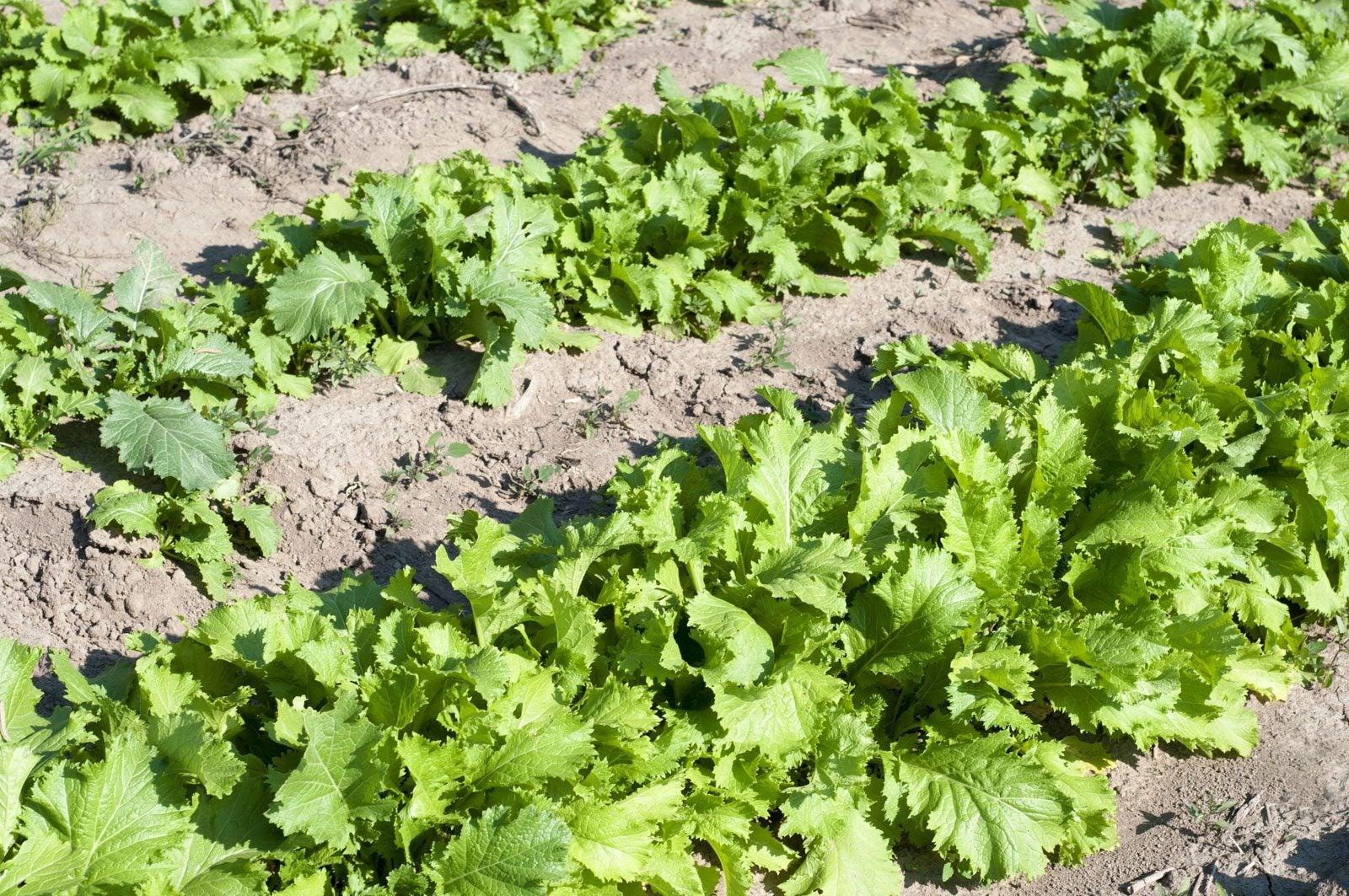 types of vegetable gardening pdf