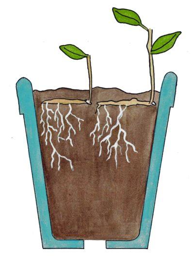 Horizontal planting
