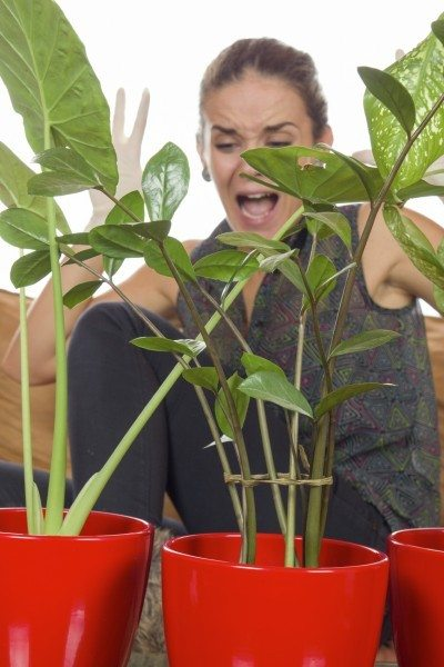 Indoor ornamental pests: how to bring plants inside without bugs