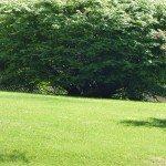 spring-lawn