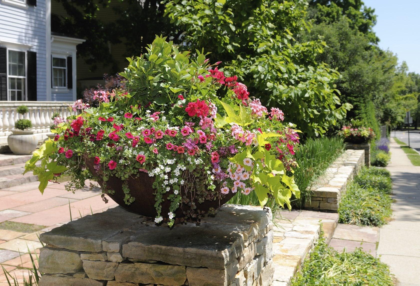 Tips For Container Gardening Design: What Is A Thriller, Filler Spiller