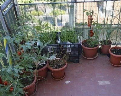 Urban apartment gardening: gardening tips for apartment dwellers