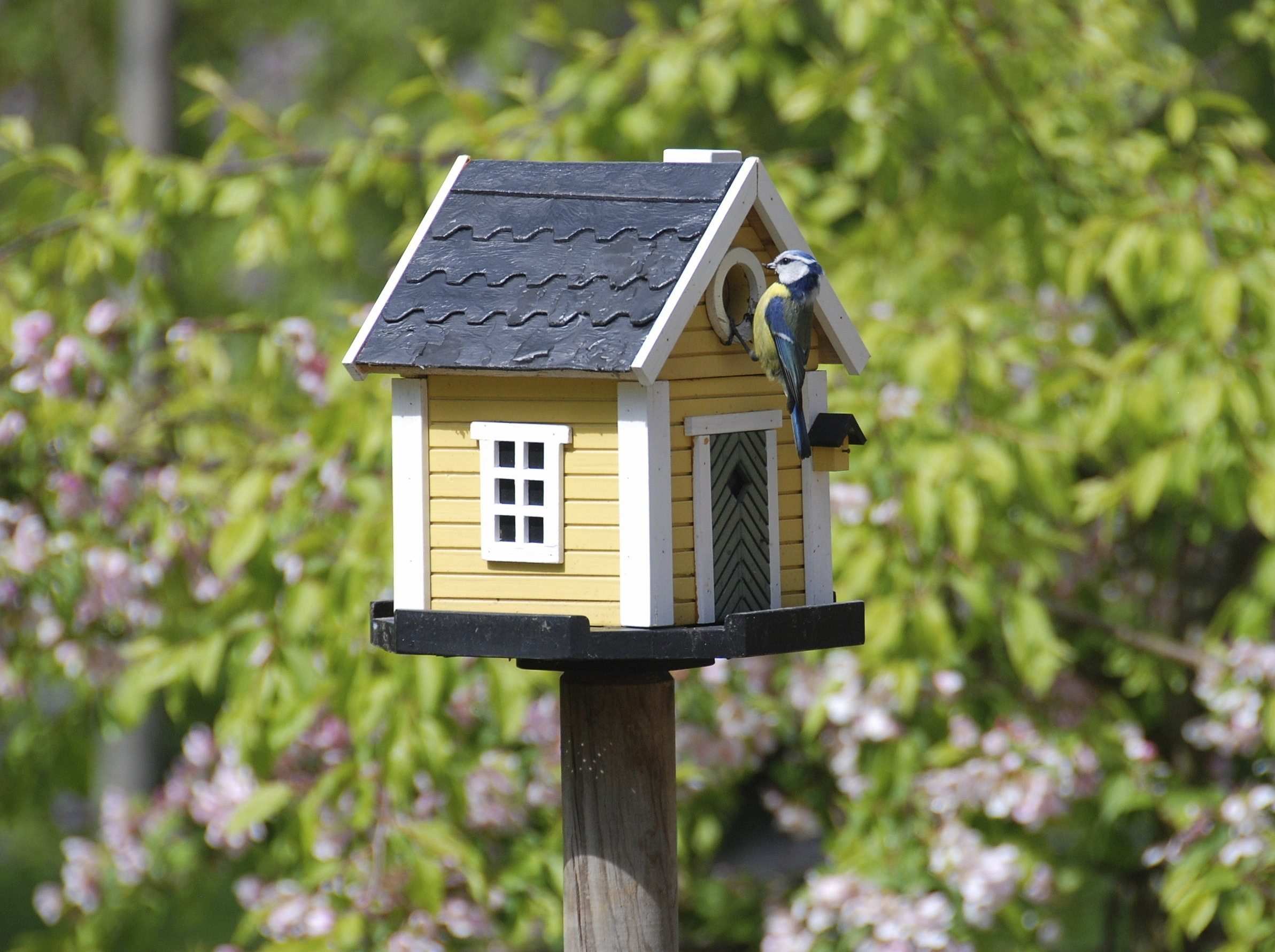 Garden birdhouses types of birdhouses for the garden for Bird house styles