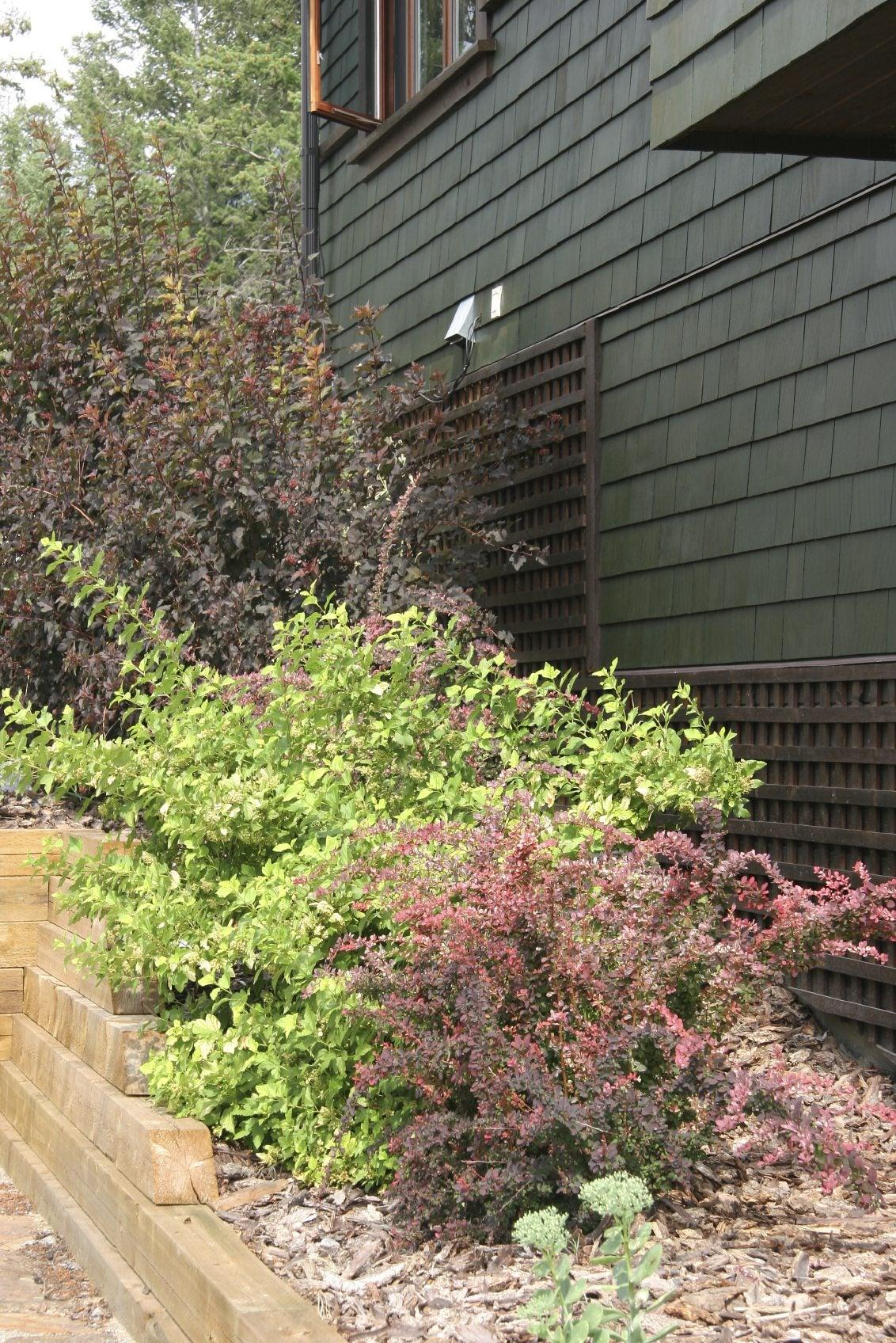 Hardy Garden Plants: Best Plants For Forgetful Gardeners