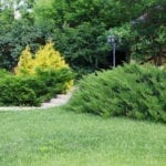 Choosing Shrubs For The Landscape Learn About Landscaping Shrubs And Their Uses