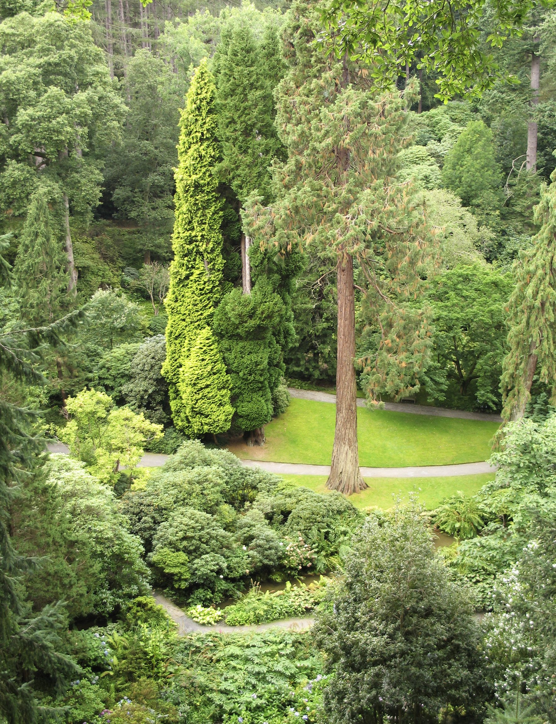 Evergreen Tree Types: Popular Evergreen Trees For Landscaping