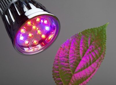 Red Light Vs Blue Which Color Is Better For Plant Growth