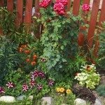 Garden flowers, flowerbed