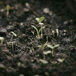 seedling light