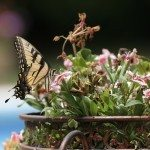 butterfly container