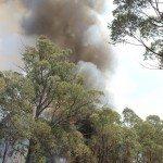 eucalyptus fire