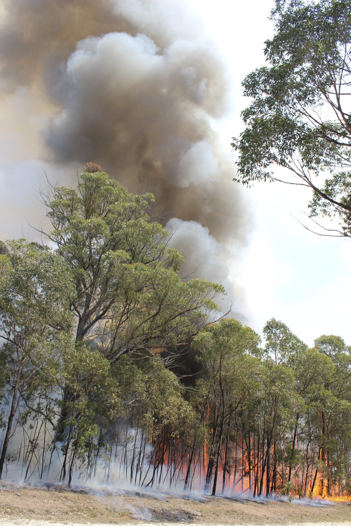 eucalyptus oil and fire information about flammable