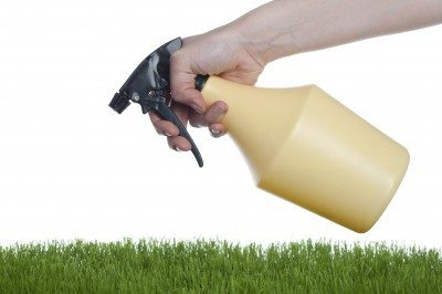 Homemade Lawn Fertilizers: Does Homemade Lawn Fertilizer Work