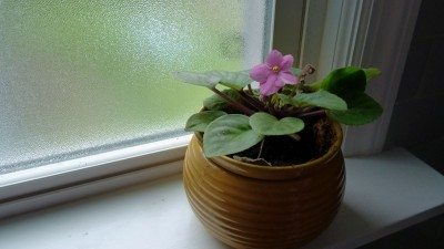 Rotating houseplants – how often should i turn a houseplant