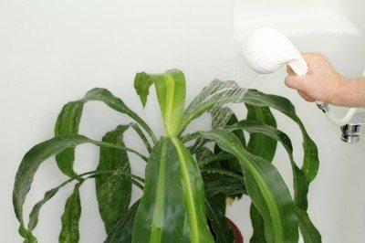 Salt leaching methods: tips on leaching indoor plants