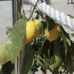 lemons by sea