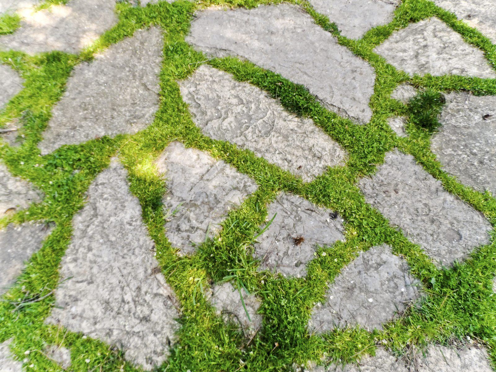 How to Grow Grass Between Pavers forecasting