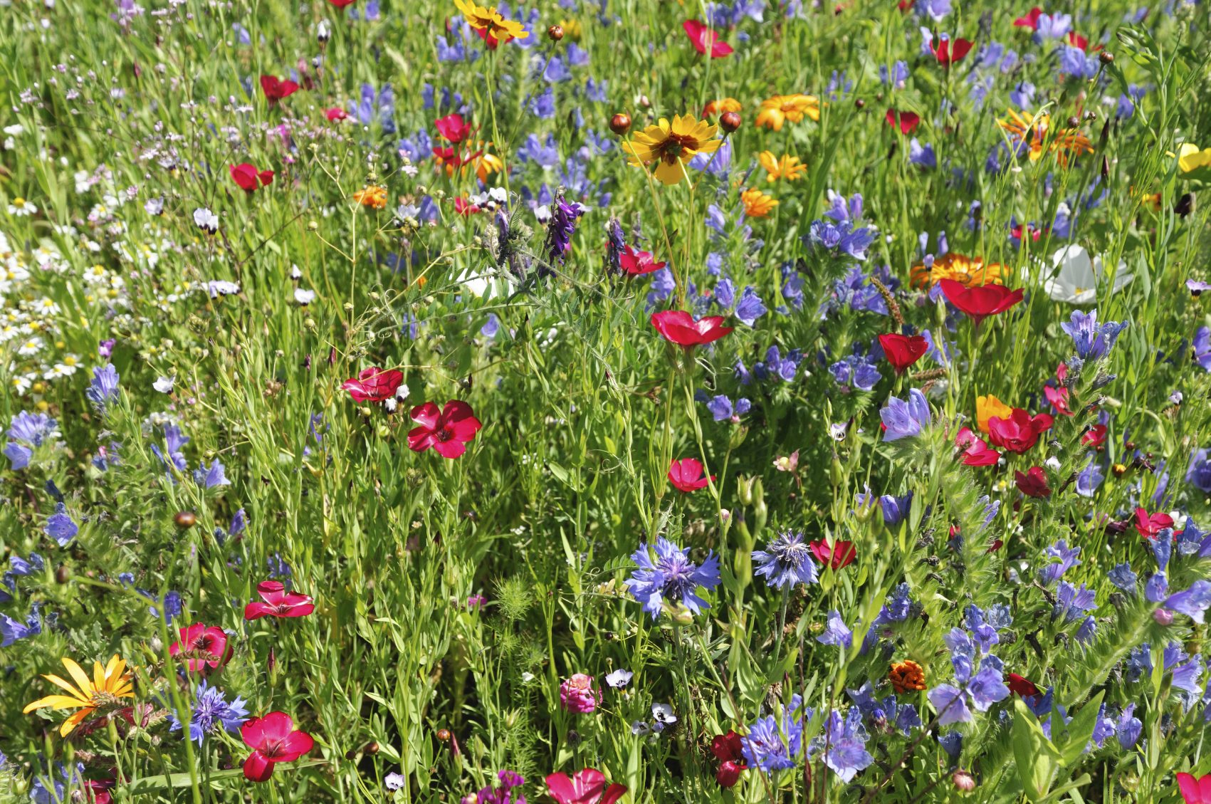 Backyard Meadow Care Tips For Maintaining A Wildflower Meadow In Fall