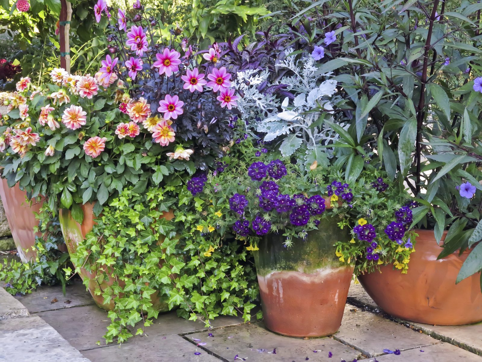 Container Garden Ideas: Container Garden Placement