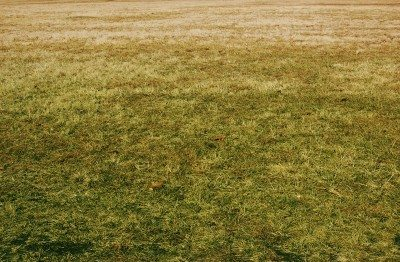 Yellow lawn care: reasons and fixes for yellow lawns