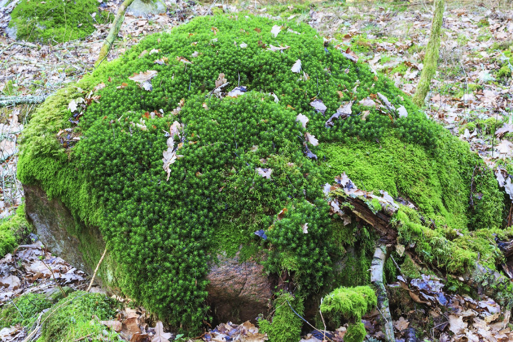 Different Types Of Moss - Learn About Moss Varieties For ...