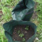 Green garden grow bags