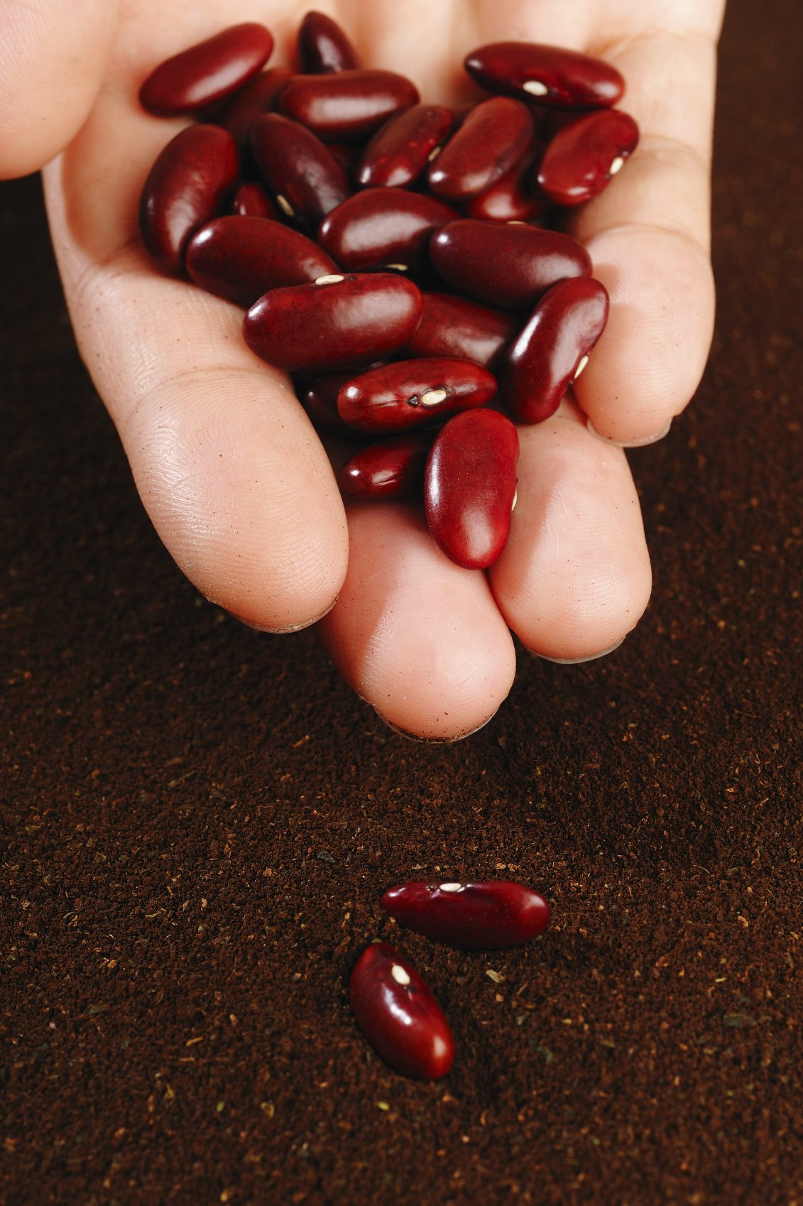Growing Kidney Beans Tips On Caring And Harvesting Kidney Beans