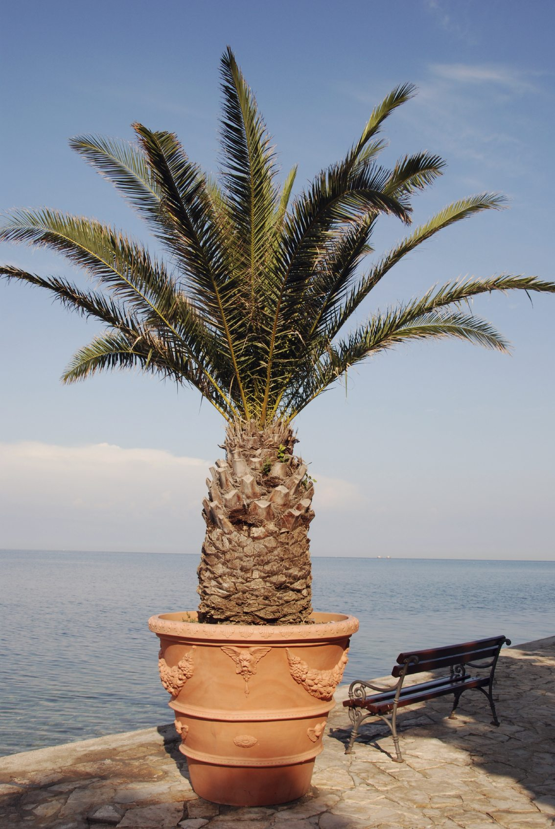 potted-palm Palm Trees For Houseplants on palm tree bonsai, palm tree floral, palm tree evergreen, palm tree nursery, palm tree tree, palm tree wreath, palm tree food, palm tree vegetable, palm tree outdoor, palm tree seedlings, palm tree roses, palm tree planting detail, palm tree fossil, palm tree vines, palm tree bamboo, palm tree green, palm tree nature, palm tree lawn, palm tree shrub, palm tree water,