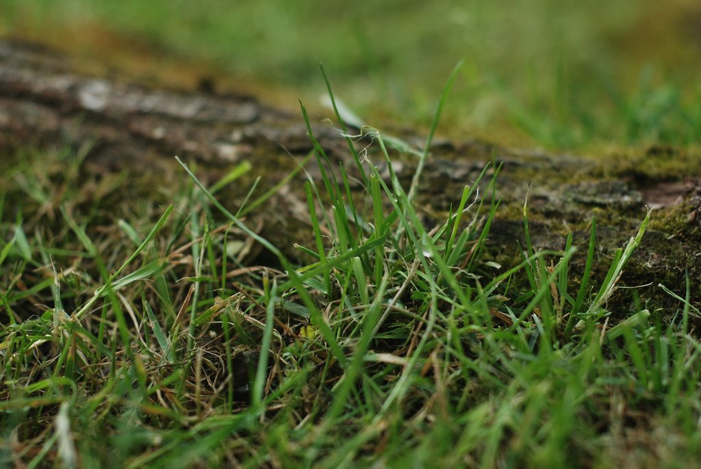 Bermuda Grass Control How To Get Rid Of Bermuda Grass