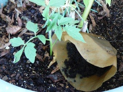 Can You Grow Vegetables In Coffee Grounds Using Your Vegetable Garden