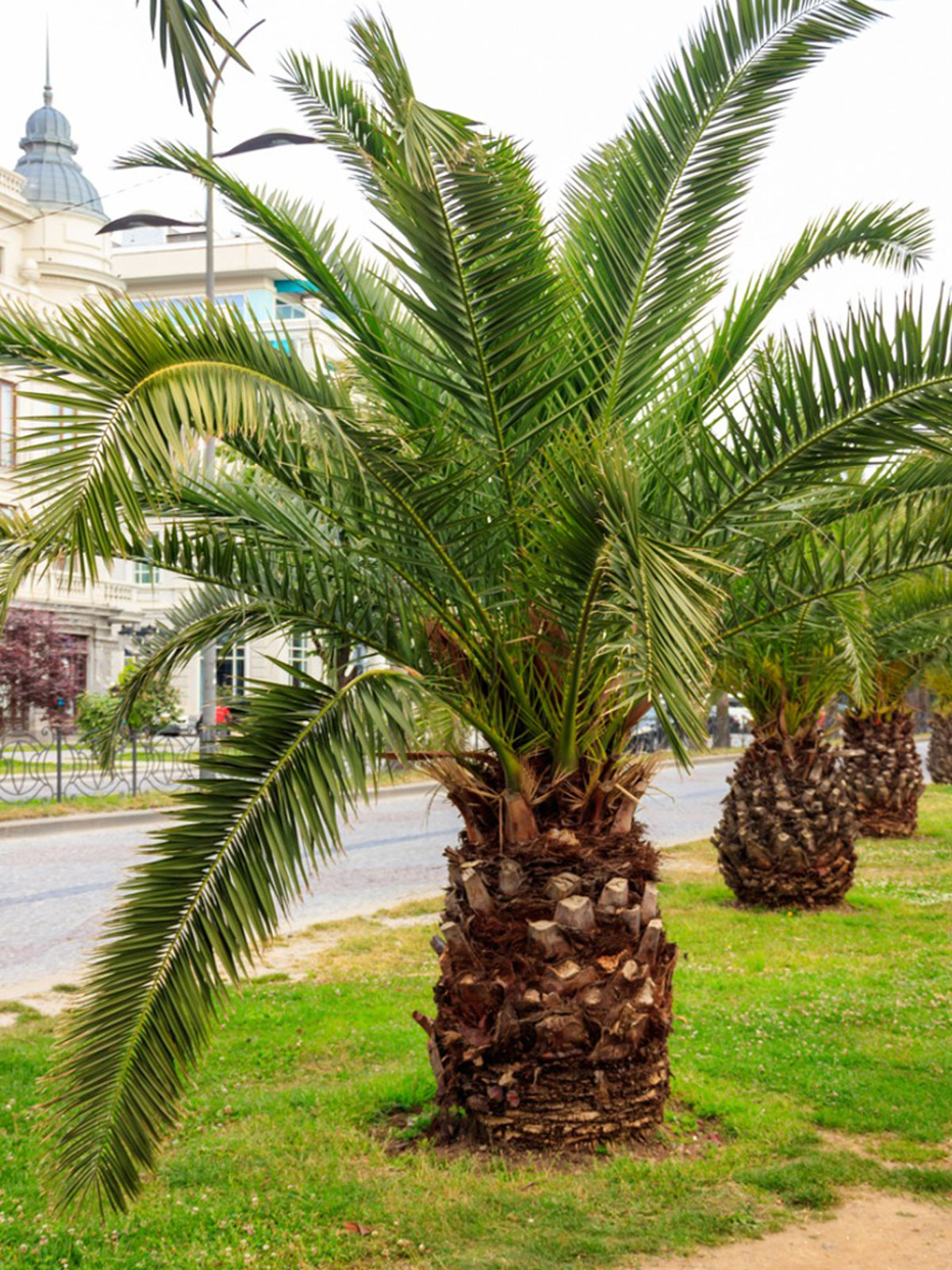 Small Palm Trees Learn About