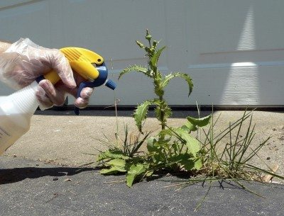 What is an organic herbicide: using organic herbicides for weeds in lawns and gardens