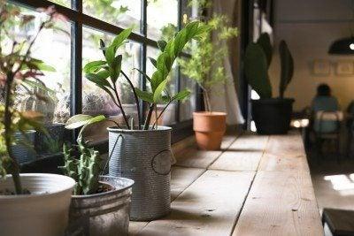 Urban shade gardens: tips on urban gardening in low light