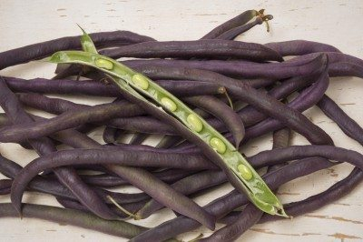 A pile of purple hull peas on an old table with distressed white paint. The purple hull peas, a member of the southern pea family, are a good source of protein and dietary fiber available.  They are also very high in folate, a form of B vitamin.