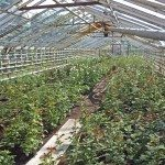 View inside glass greenhouse with water heating tubes