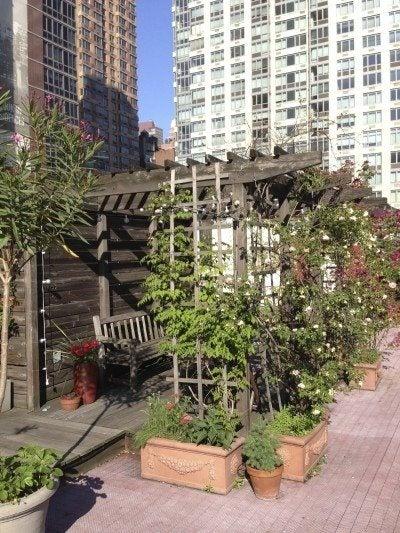 Urban Gardening: The Ultimate Guide To City Gardening